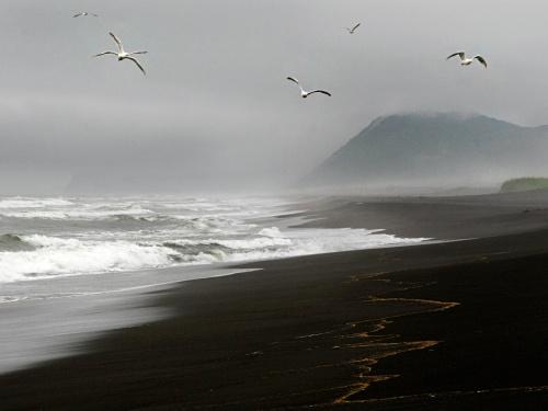 seagulls-2621690932-O